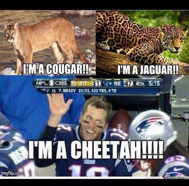 Cougars and Jaguars ... wonderful animals!  Cheetah's ... not so much!
