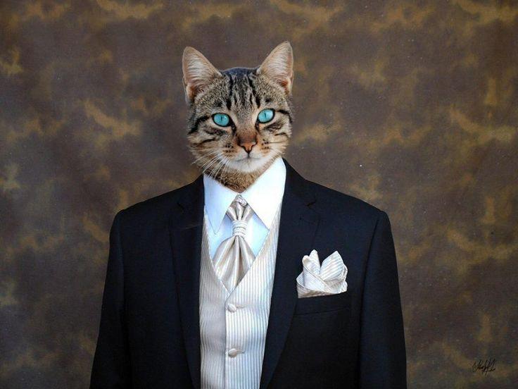 Mr cat....