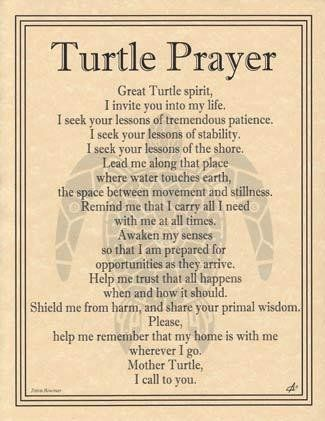 Turtle Prayer – Lady Adrienne's Cauldron