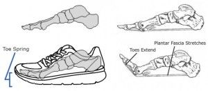 The toe-spring in footwear worn by heel strikers impairs the foots natural ability to moderate bending stiffness in response to surface hardness. As a consequence, the feet receive inadequate sensory input, limiting bending stiffness behavior thereby increasing the risk of ankle injury http://runforefoot.com/forefoot-strikers-elastic-behavior-arch-heel-strikers-footwear-toe-springs/
