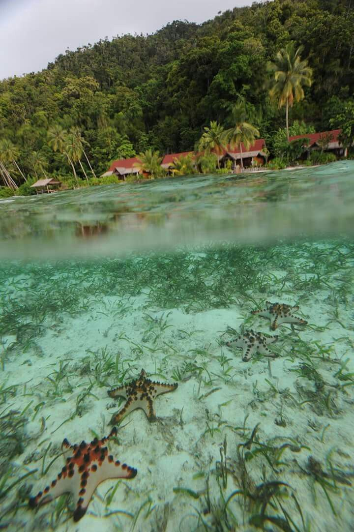 "Meravigliose stelle marine. Isole Raja Ampat, l""ultimo paradiso terrestre""."