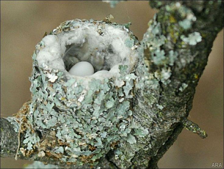 How To Attract Hummingbirds By Toledoblade #Hummingbirds #Garden