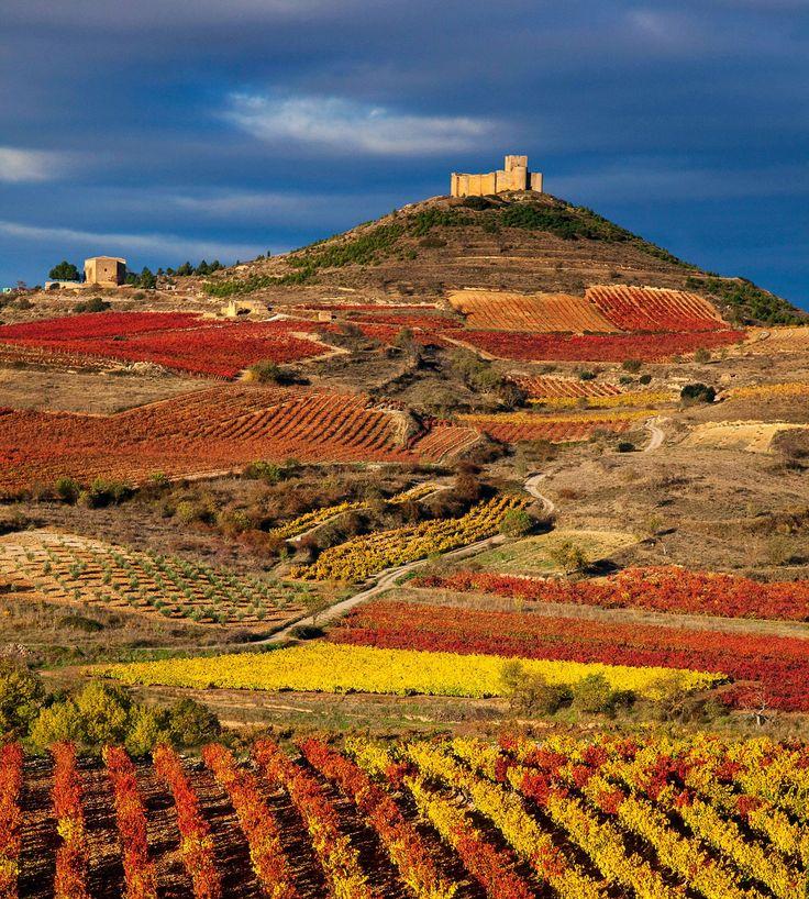 Viñedos en La Rioja, Spain.