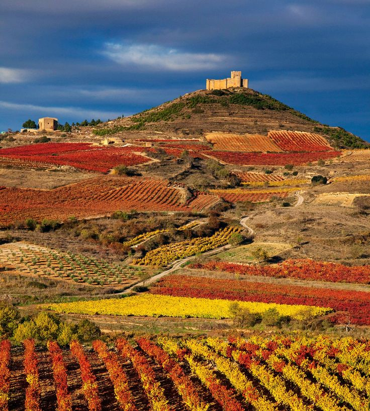 Viñedos en La Rioja, Spain. Vineyards and a castle. Castillo de Davalillo (San Asensio)