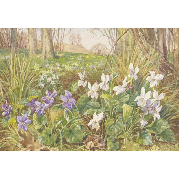 Margaret Tarrant - Dog Violet and White Sweet Violet