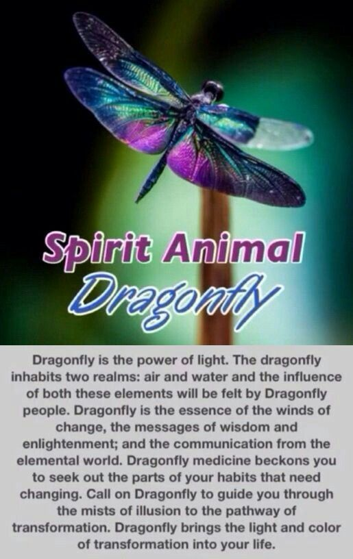Dragon Fly Spirit Animal  - Pinned by The Mystic's Emporium on Etsy