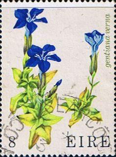 Eire Ireland 1978 Wild Flowers Fine Mint SG 421 Scott 428 Other European and British Commonwealth Stamps HERE!