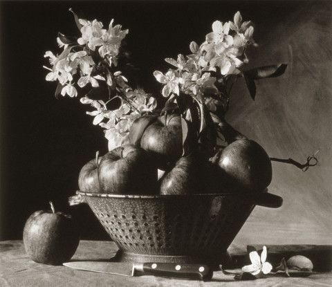 Apples and Blossoms ©Cy DeCosse Fine Art Photography. The Beauty of Food Collection. Limited edition platinum-palladium print. CyDeCosse.com #photography #art #food