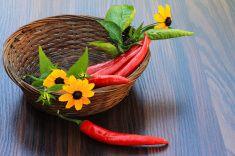 Красный перец с листьями и желтые маргаритки stock photo