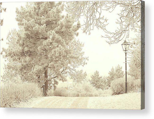 Jenny Rainbow Fine Art Photography Acrylic Print featuring the photograph Lacy Lane. Gentle Winter by Jenny Rainbow