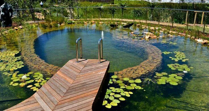 Natural swimming pool