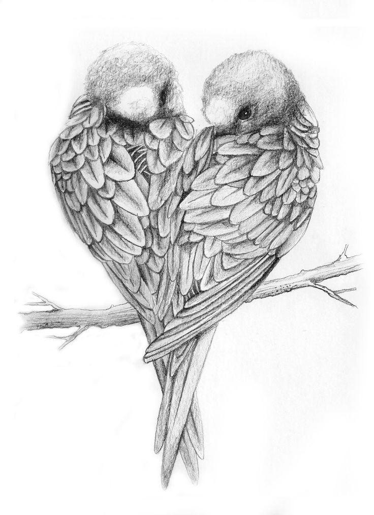 Pin by Maxie Jingles on Pencil drawings | Love birds ...