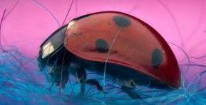 Quero Saber - Sony capta os 10 insetos com os quais vamos viver este inverno