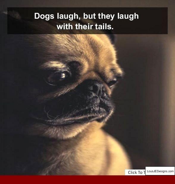 Pin On Dog Training Tips