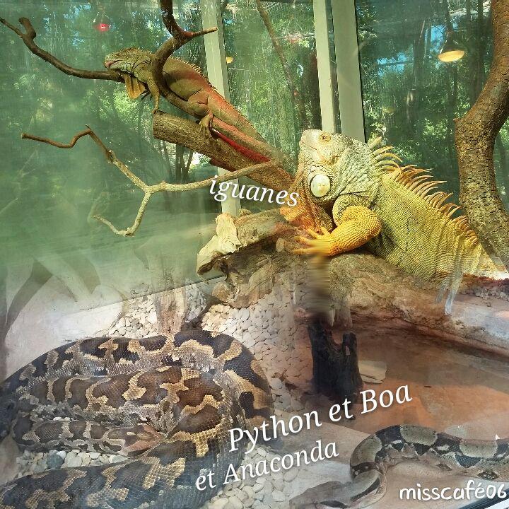au Zoo de la Palmyre Charentes maritimes 17