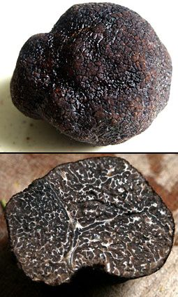 So you want to be a truffle-farmer…?   A whole truffle, and one in cross-section