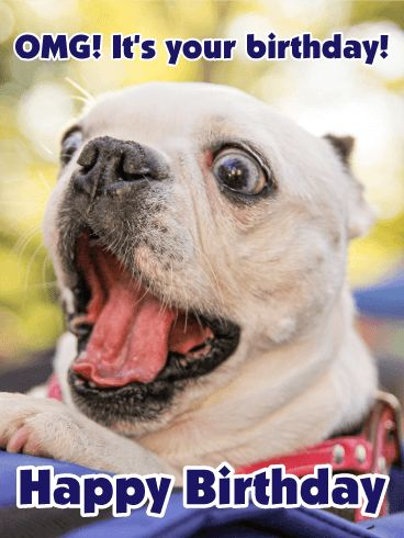 "OMG! It's your brithday! - Happy Birthday Card. This crazy-eyed dog is super excited to celebrate a birthday! (He's also super cute!) Say ""Bow-Wow WOW"" to someone awesome in your life with this funny birthday card. OMG, and don't BRB, send it now so they can ROFL ASAP."