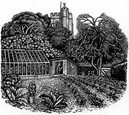REYNOLDS STONE wood engraving. Vegetable garden in Litton Cheney. Unpublished. 1953