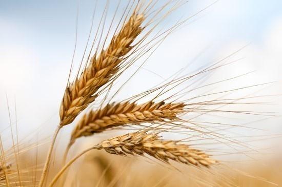 Scopri i 12 #cerealiintegrali  |  casadivita.despar.it