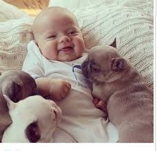 kid with baby french bulldog - Google Search