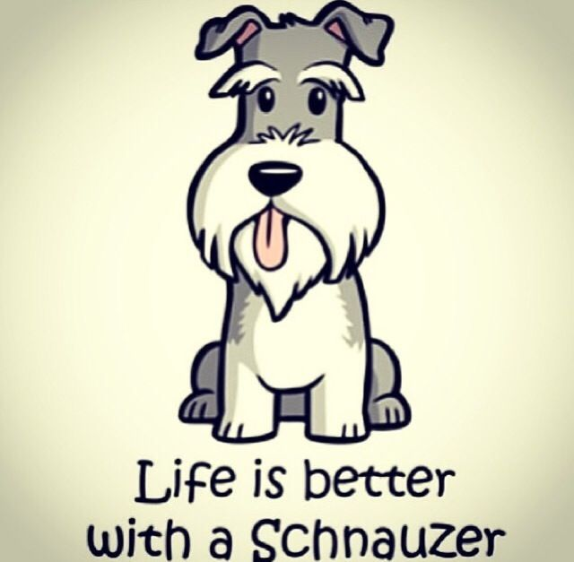 "Click visit site and Check out Cool ""Miniature Schnauzer"" T-shirts. This website is superb. Tip: You can search ""your name"" or ""your favorite shirts"" at search bar on the top."