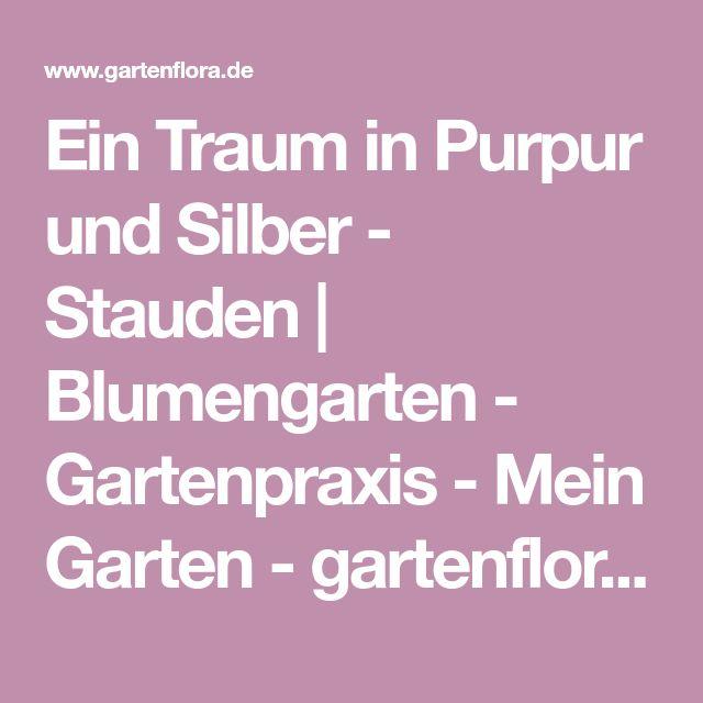 Ein Traum in Purpur und Silber - Stauden | Blumengarten - Gartenpraxis - Mein Garten - gartenflora.de
