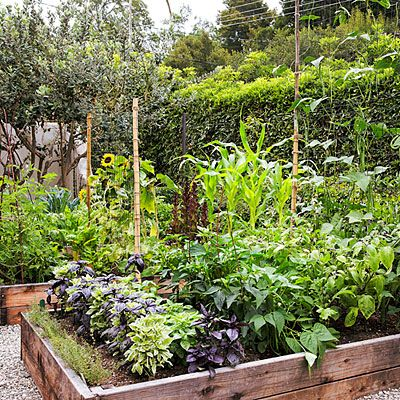 7 secrets to a great edible garden - Easy raised beds - 4- by 8-foot raised beds from nursery kits and lined with wire mesh to deter gophers. They accommodate an ever-changing cast of edibles, planted in rows—lowest crops in front and tallest in back—so sunlight reaches them all.