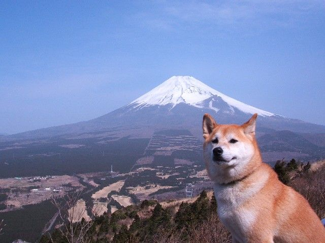日本の山と日本の犬(その2) 旧作品No.26514   pya! (ネタサイト)