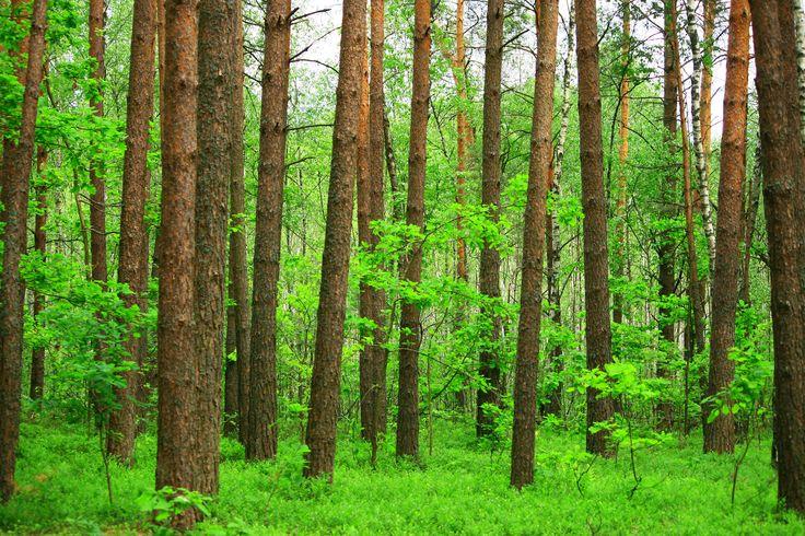 """ДП """"Волинське обласне державне управління лісового та мисливського господарства"""".  ДП """"Спеціалізоване лісогосподарське підприємство   """"Локачіагроліс""""  45800, смт. Локачі, вул. 1-го Травня, 25 черговий:+38-03374 2 18 01 приймальна / факс:+38-03374 2 13 53 e-mail: lisgosp1@ukr.net"""