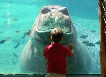 San Antonio Zoo, San Antonio Texas