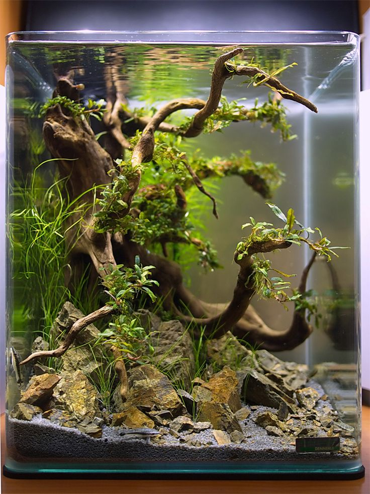 1000+ ideas about Aquarium Design on Pinterest Aquarium, Aquascaping ...