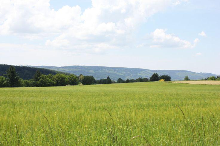 Paysage proche de la Bezassade à St-Léger-la-Montagne. Le Pays de l'Occitane et des Monts d'Ambazac est un massif granitique qui culmine à 701 mètres. Le Pays offre une diversité de paysage de vallées, landes et forêts qui s'offriront à vous par la randonnée. La nature reste prédominante avec des lieux secrets tels que la Tourbière des Dauges ou l'Arboretum de la Jonchère. En savoir + sur www.randonnee-hautevienne.com