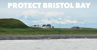 Desktop Activist Tucson : Protect Bristol Bay from dangerous open-pit mining...