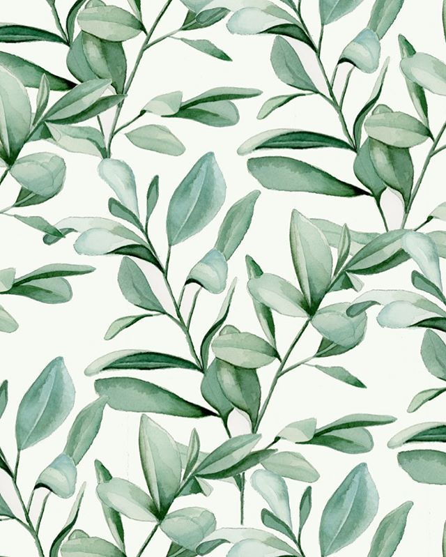Watercolour Green Eucalyptus Banner On White Background