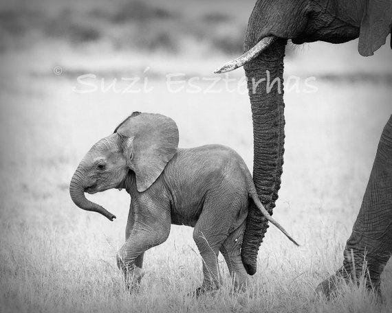 SAFARI BABY ANIMALS, Set of 4 Black & White Photos, 8 X 10, Elephant, Lion, Cheetah, Giraffe, African Wildlife Photography, Nursery Wall Art
