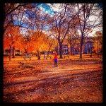 Trottinette d'automne… #montreal #livemontreal #city #park #colors #fall #automne #quebec #leafs #photo #photographie #ville #nature