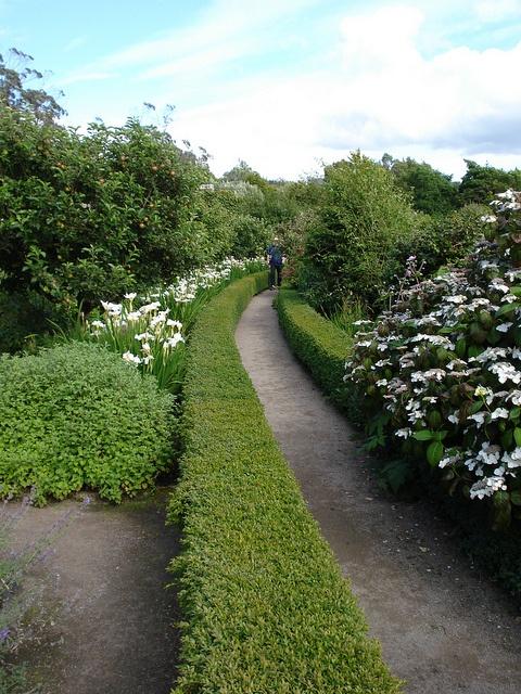Hedge-defined path. Inverewe Garden, Lock Ewe, Scotland