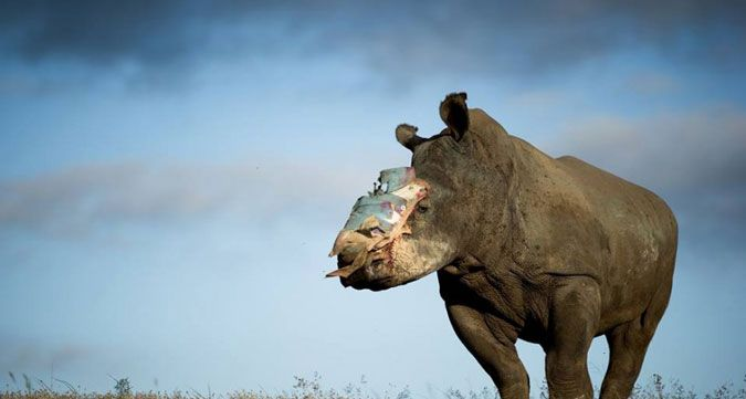 Hope became the poster child of the fight against rhino poaching after she survived a botched poaching attack and rose to be an icon.