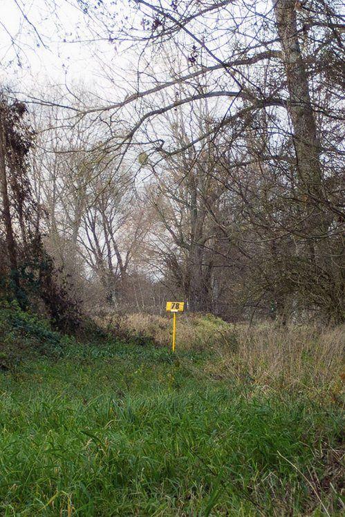 """""""Marquant le besoin de contrôler la vie sauvage aux abords des villes le cadastre implante à distance régulière ses panneaux jaunes, quadrillant l'espace incontrôlable de la forêt. Pointés au centre de la photographie ces tiges recouverte d'une tête jaune numérotée apparaissent comme les épingles qui tiennent le paysage en place. Quadriller l'espace, le normer, l'organiser. La forêt comme un tissu qui s'échappe, s'écoule, se pli, se froisse, s'étale. Innacceptable dans la ville tendue…"""
