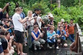 MBA Bali Tour - orangutan borneo