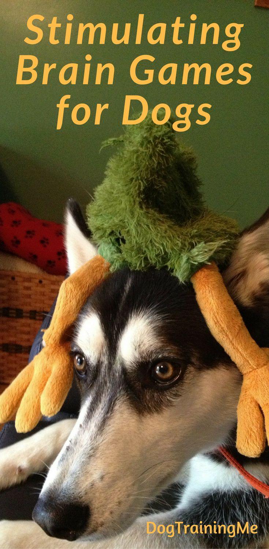 Pets for Adoption | Petfinder