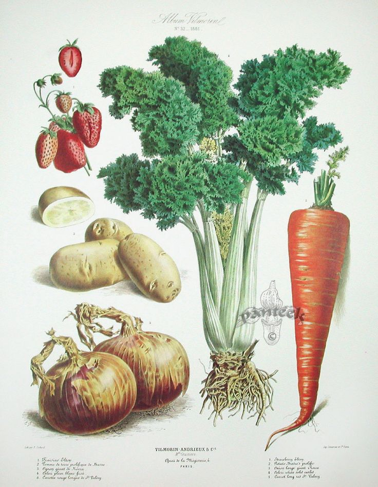Vilmorin Fruit Vegetable Prints Vegetable Prints Botanical Prints Vegetable Gardening Books