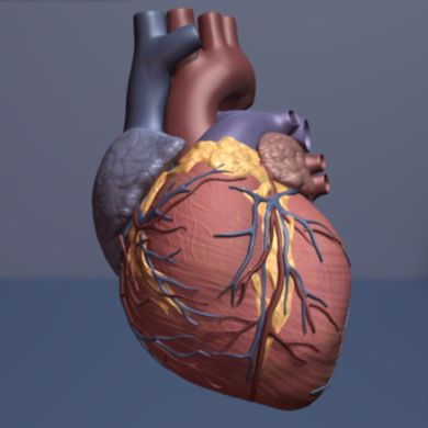 Researchers at the Stanford University School of Medicine have identified a gene that, when working properly, appears to reduce the risk of heart failure and improve treatment outcomes, highlighting a possible target for the development of new drugs.