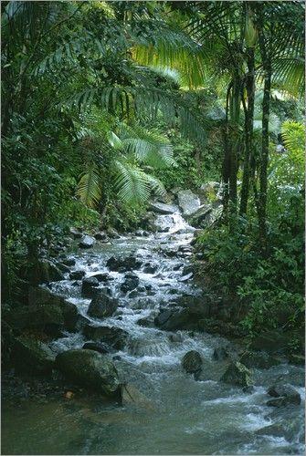 Taylor S. Kennedy - Ein tropischer Strom im Regenwald