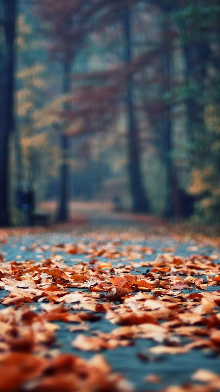Autumn Rusty Leaves Park Alley iPhone 6 Wallpaper