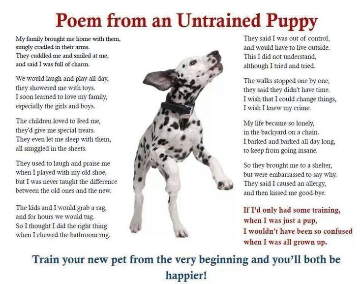 How To Train Your Bird Dog Puppy