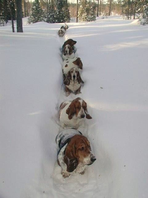 """My five year old just said """"look at all those basket hounds in the snow"""""""