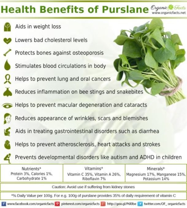 410 Best Garden Herbs Images On Pinterest Herbal Medicine Gardening And Herbalism