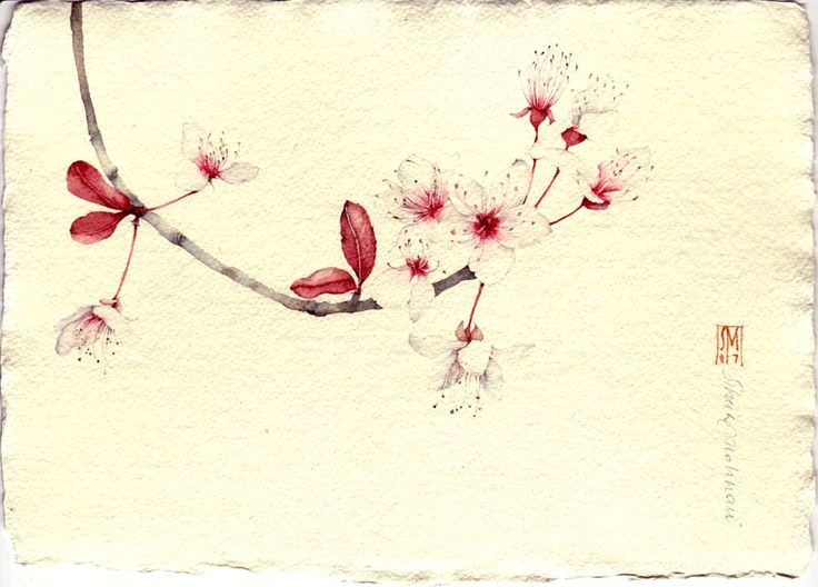 SILVIA MOLINARI    PRUNO. acquerello su carta a mano, 14x21cm circa, anno 2007    Gallery of works in watercolor on handmade paper and made of pure cotton between 2004 and 2009