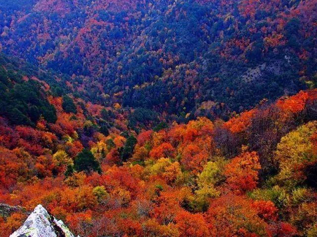 Kaz dağları türkiye.